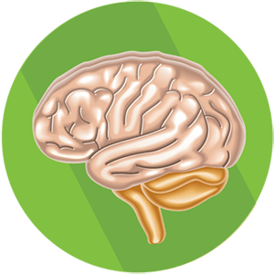 Nervy a stres